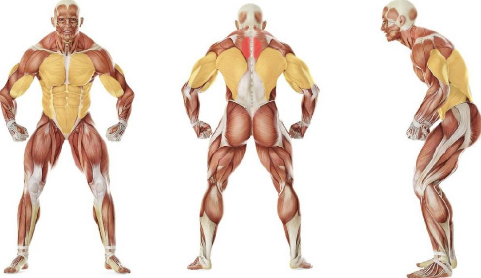 Top 5 Back Exercises For Men S Health Building Beast Become A Beast