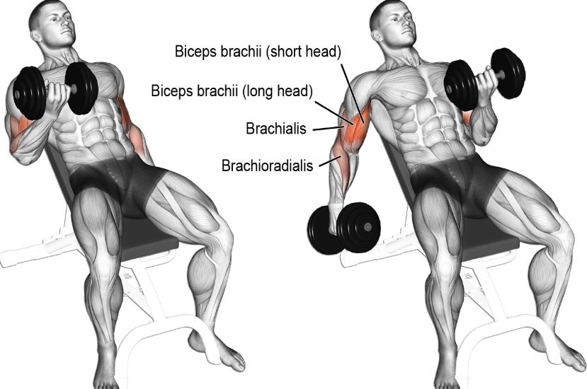 incline dumbbell 3