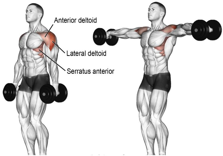 side lateral raise22