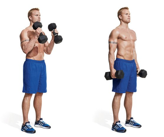 biceps workout at home with dumbbells