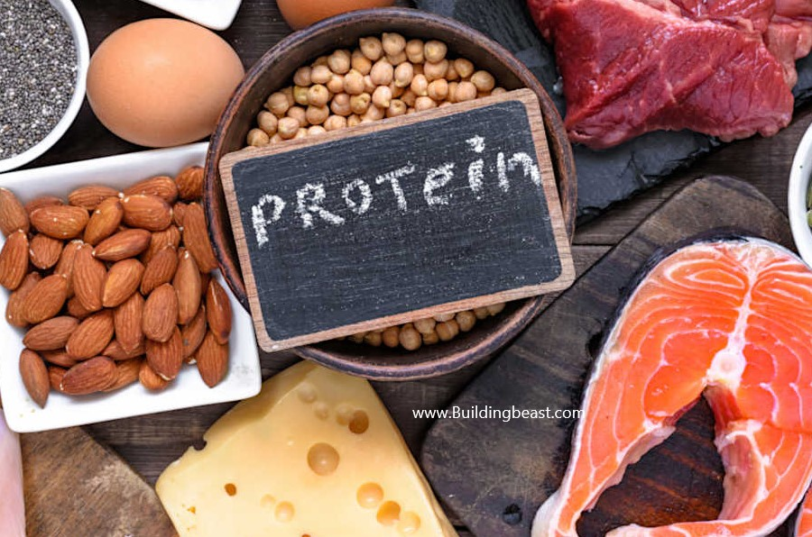 can a high protein diet help you lose weight