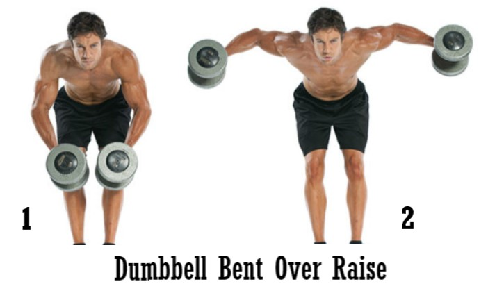 dumbbell bent over raise