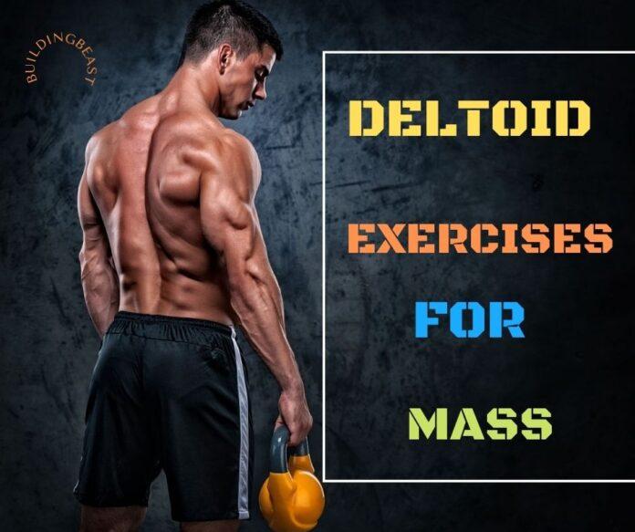 Deltoid Exercises to Build Massive Shoulders