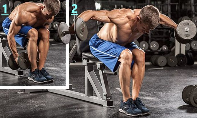 Seated Bent Over Lateral Raise